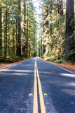 Redwood Avenue Stock Photography
