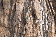 Redwood bark background Stock Photography