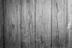 Redwood, black and white background Stock Image