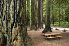 Picnic table redwood forest park horizontal Royalty Free Stock Photography