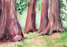 Redwood giant trees. Forest. Watercolor painting Stock Photo