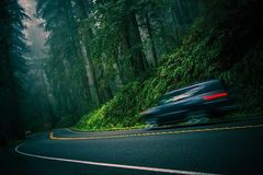 Redwood Highway. California 101 Foggy Redwood Highway and Speeding Car. Crescent City, California, United States Royalty Free Stock Image
