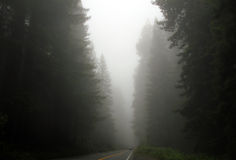 Redwood Highway Stock Images