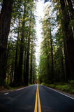 Redwood Highway Royalty Free Stock Images