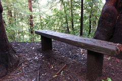 Redwood lasowa ławka obrazy stock