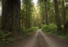 Redwood lasu wiejska droga Fotografia Stock
