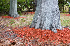 Redwood mulch ring Stock Image