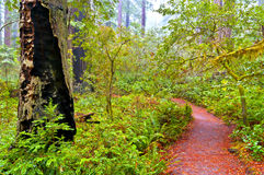 Redwood National Park Stock Images