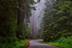 Redwood National Park, California Stock Image