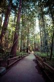 Redwood national park in california, usa Stock Photo