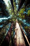 Redwood national park in california, usa Royalty Free Stock Photos