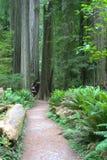 redwood np Стоковая Фотография