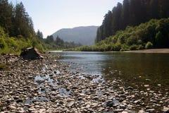 Redwood NP del fiume Immagini Stock