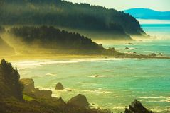 Redwood Pacific Coast. Foggy Redwood Pacific Ocean Coast. Early Spring in Northern California, United States Stock Photos