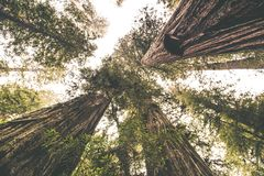 The Redwood Place Royalty Free Stock Photo