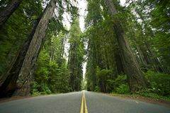 Redwood State Park Stock Photography