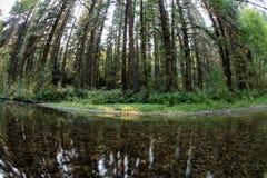 Redwood strumień w Północnym Kalifornia i drzewa Fotografia Royalty Free