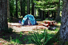 Redwood Tent Campsite Stock Photography