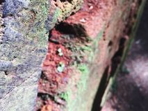 Redwood Tree Details. Close up of giant redwood stock photo