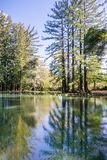Redwood trees reflected in a calm pond, San Francisco bay area, California stock photo