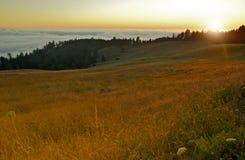 Redwood wzgórza Kalifornia Obrazy Royalty Free
