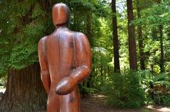 Redwoods σε Rotorua Νέα Ζηλανδία Στοκ Φωτογραφία