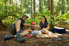 Redwoods в Rotorua Новой Зеландии Стоковое Фото