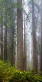 Redwoods и рододендроны вдоль заводи Damnation отстают в De Стоковые Фотографии RF