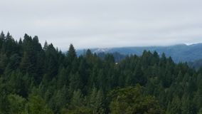 Redwoods Калифорнии Стоковое Изображение