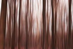 redwoods Imagem de Stock Royalty Free
