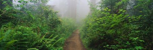 Redwoods do crescimento velho, N. CA imagens de stock royalty free
