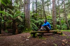 One of many natural resting points. The Redwoods forest in Rotorua has many natural resting points throughout the trail systems. A very popular place to walk and stock photo