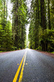 Redwoods. Highway through redwoods national park, California, USA Royalty Free Stock Photography