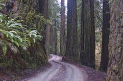 Redwoods, parque nacional do Redwood. foto de stock