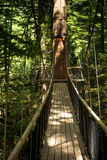 Redwoods `Tree Walk` 05 Royalty Free Stock Photo