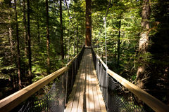 Redwoods `Tree Walk` 06 Royalty Free Stock Image