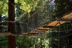 Redwoods `Tree Walk` 08 Stock Images