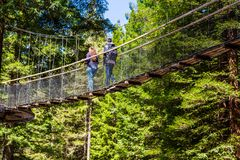 Redwoods Treewalk - Rotorua στοκ φωτογραφία