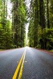 Redwoodträd Royaltyfri Fotografi