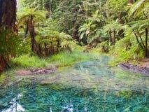 Redwoodträd blå sjö i Rotorua, Nya Zeeland arkivbild