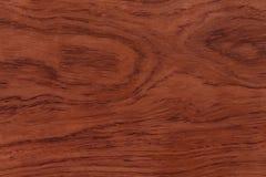Redwoodträdbakgrund eller textur Royaltyfri Foto