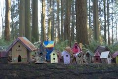 Redwoodträdet parkerar i södra Surrey Royaltyfri Bild