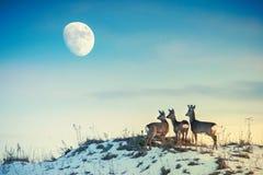 Reeën op een heuvel die aan maan kijken stock foto's