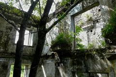Ree and  bushes sprouted inside an abandoned dilapidated building stock image