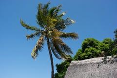 Ree della palma Fotografia Stock