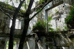 Ree et buissons ont poussé à l'intérieur d'un bâtiment délabré abandonné image stock