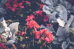 Ree och vita blommor Royaltyfria Bilder