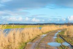 Reed в поле вдоль край озера стоковая фотография