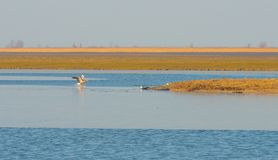 Reed в поле вдоль край озера стоковые фотографии rf