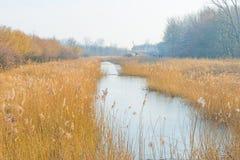 Reed в поле вдоль край озера стоковое фото rf